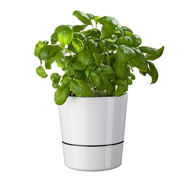 pot hydro pour herbes aromatiques blanc mepal bo tes et accessoires de conservation. Black Bedroom Furniture Sets. Home Design Ideas